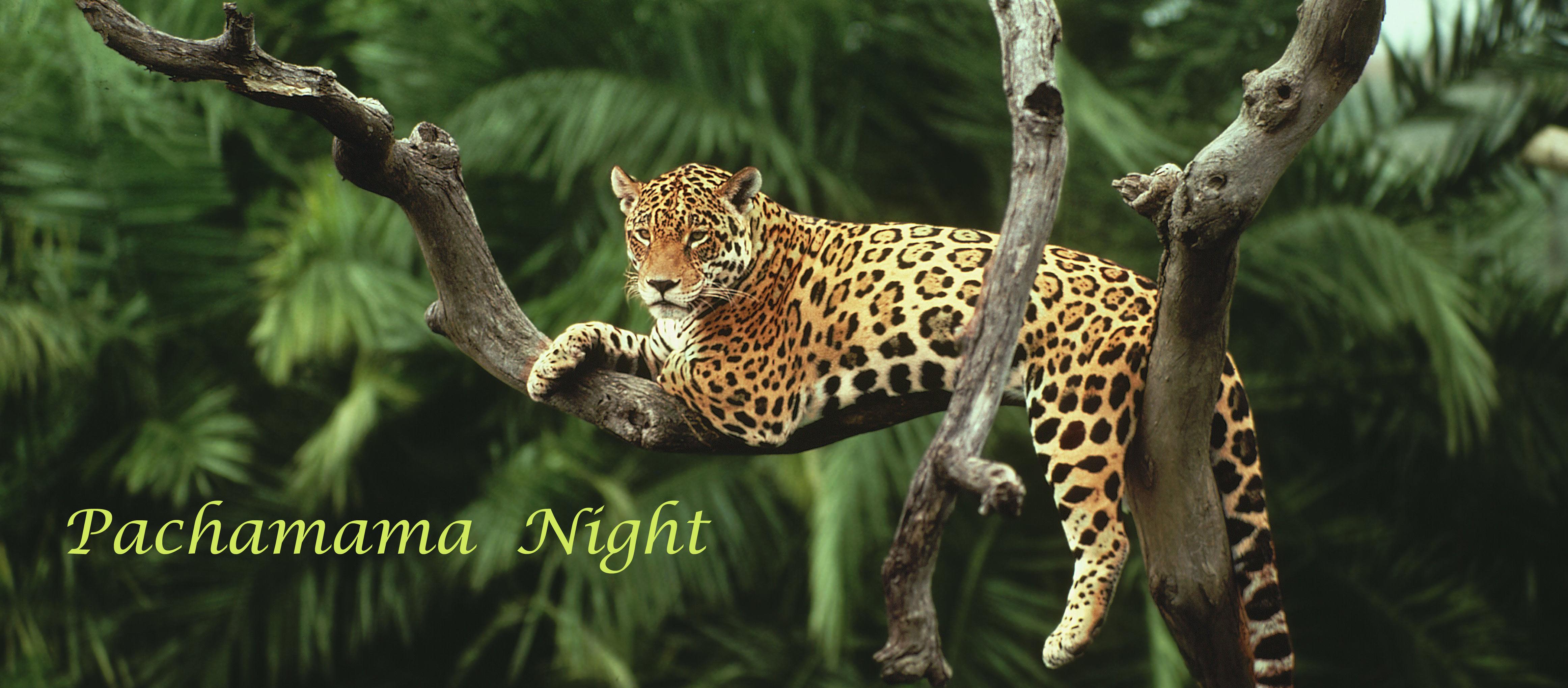Pacha Mama Night Movement Medicine Dans Sari Veugelers bescherm het Amazone regenwoud